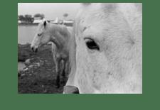 horses france ii