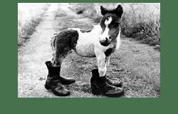 pony mit shoes