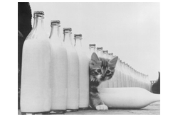 cat mit milk