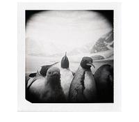 penguin conspiracy