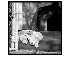 trio_puppies