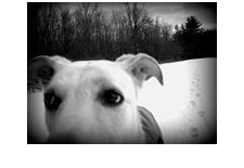 dog_ojoyous