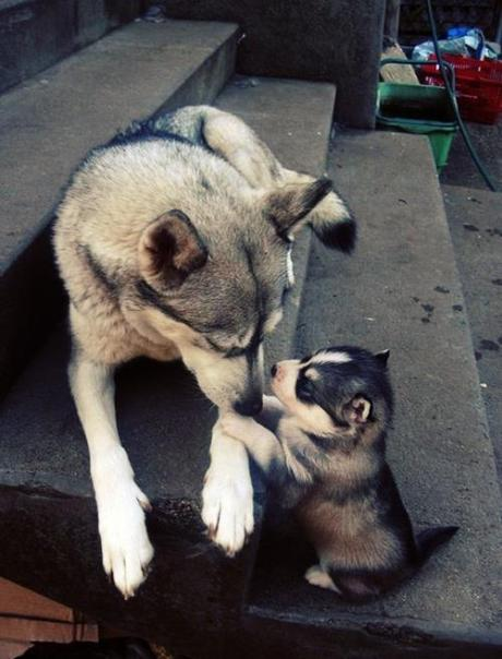 dog_pup_iq!