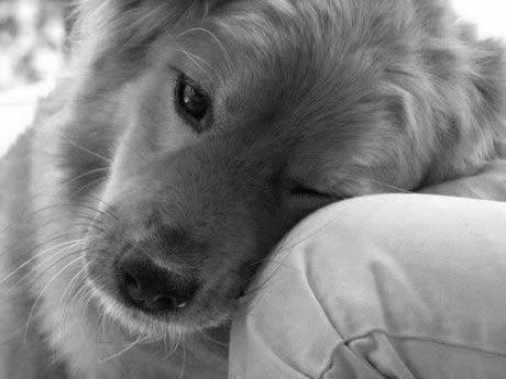 pup_love_bw