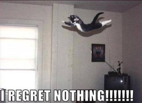 kitty_dive_regret_nothing