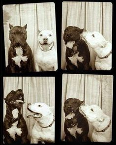 dogs_love_photo_booth