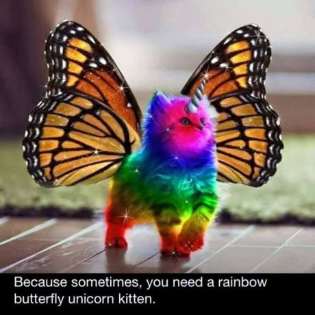 butterfly unicorn rainbow kitten