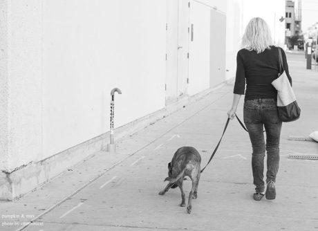 Max Adams & Pumpkin the Dog Tool Around Austin